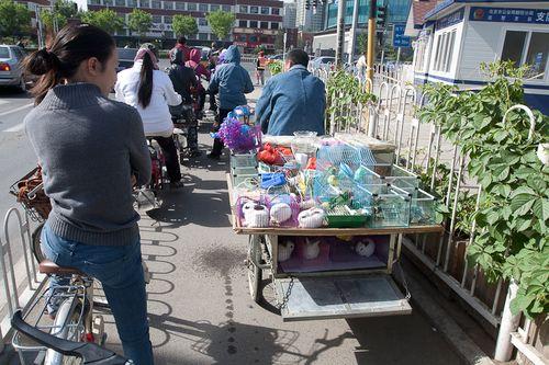 Mobile Pet Store Beijing