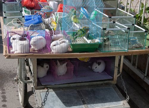Pet store on back of a cart, Beijing