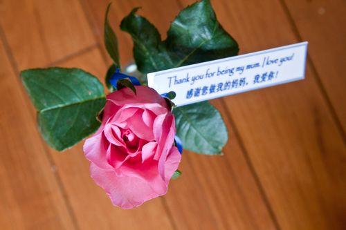 Mum's Day Rose