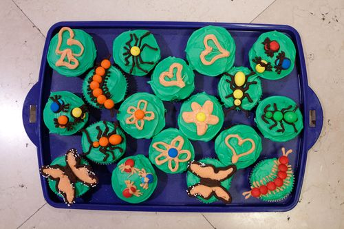 chocolate toppers on cupcakes - bugs, butterflies, hearts